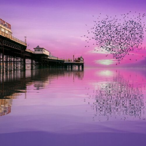 Love - murmurations over the palace pier by Brian Roe